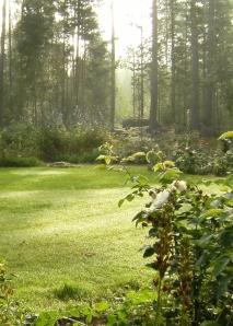 Omslag Trädgård 2014